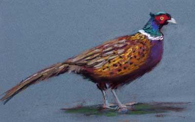 gina_wright_male_pheasant_pastel.jpg