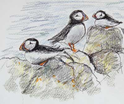 gina_wright_puffins_isle_of_may_watercolour_wax_pastel_sketch.jpg