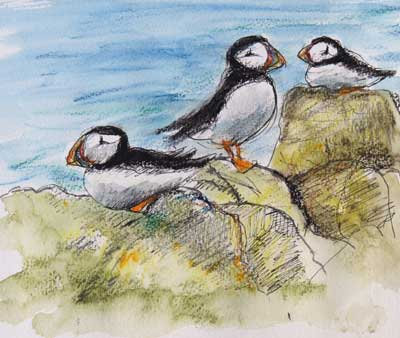 gina_wright_puffins_isle_of_may_watercolour_wax_pastel_sketch_after_water_added.jpg
