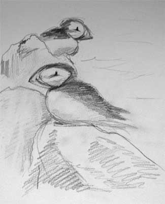 gina_wright_puffins_on_rock_isle_of_may_pencil_sketch.jpg