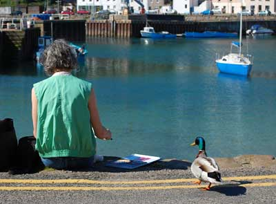 gina_wright_mallard_duck_stonehaven_harbour.jpg