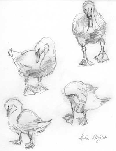 gina_wright_cygnets_pencil_sketch.jpg
